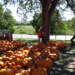 Another chance to hug a tree at the Pumpkin Patch, New Braunfels Texas - early October 2014